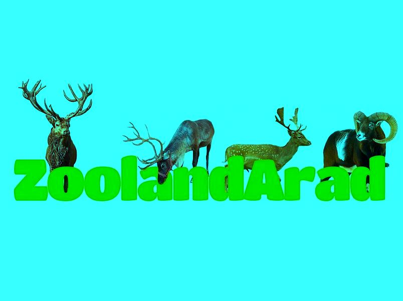 Zooland Arad